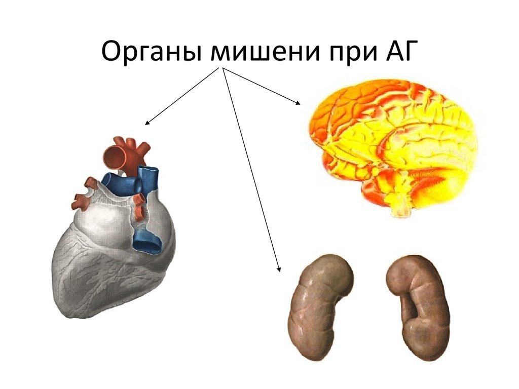 Что значит гипертония